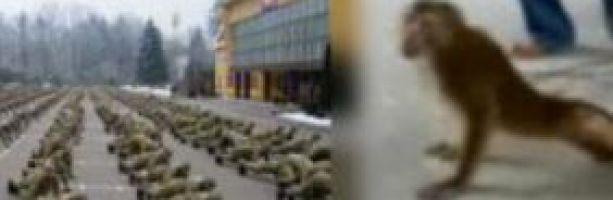 22 американских самоубийцы, нагнувшие всю украинскую армию
