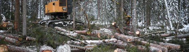 Рослесхоз предложил запретить продажу Китаю российской древесины