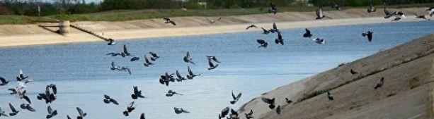 Немедленно и без всяких условий: украинцы просят Зеленского вернуть воду в Крым