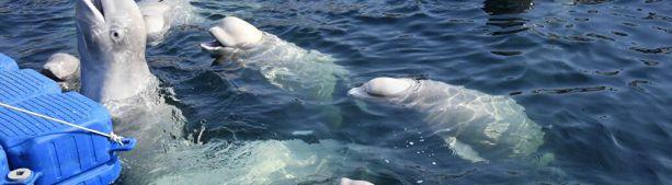 «Китовая тюрьма» и Глобальный передел - где связь?
