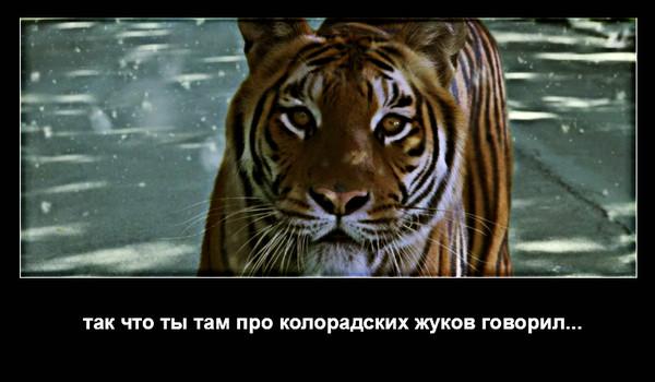 http://glav.su/files/messages/2014/04/21/2287912_7608c08f7969294ec6c6722549ec7b09.jpg